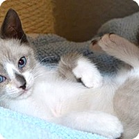 Adopt A Pet :: JuJu Bee - Davis, CA