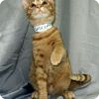 Adopt A Pet :: Radcliff - Powell, OH