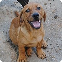 Adopt A Pet :: Tango - in CT - Manchester, CT