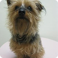 Adopt A Pet :: Spike - Gary, IN