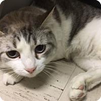 Adopt A Pet :: Selena - Medina, OH