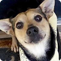 Adopt A Pet :: Maggie - Baton Rouge, LA