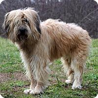 Adopt A Pet :: Butch - Waldorf, MD