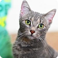 Adopt A Pet :: Polly - Xenia, OH