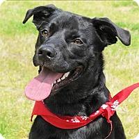 Adopt A Pet :: Kabo - Raleigh, NC