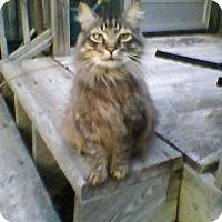 Adopt A Pet :: Sam - The Survivor - Raleigh, NC