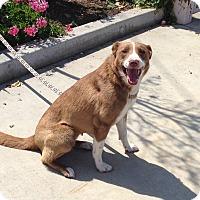Adopt A Pet :: CANELA - San Pedro, CA