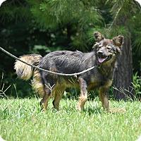 Adopt A Pet :: Shelby - Groton, MA