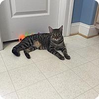 Adopt A Pet :: Rain - Chesapeake, VA