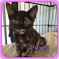 Adopt A Pet :: Paris - Enid, OK