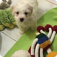 Adopt A Pet :: Marilyn - Oakland Park, FL