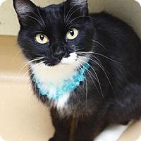 Adopt A Pet :: Kiri - Dublin, CA