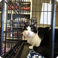 Adopt A Pet :: Miriam - Avon, OH