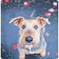 Adopt A Pet :: Flossi - Seattle c/o Kingston 98346/ Washington State, WA