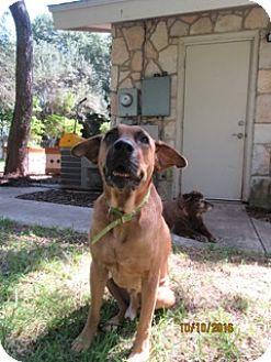 English Mastiff Mix Dog for adoption in Von Ormy, Texas - Bogey