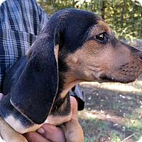 Adopt A Pet :: Spooky - Atlanta, GA