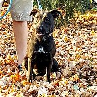 Adopt A Pet :: Alta - Salamanca, NY