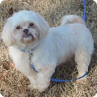 Adopt A Pet :: jimmy - Anderson, SC