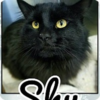 Adopt A Pet :: Shu - Edwards AFB, CA
