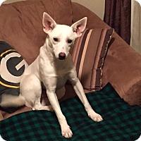 Adopt A Pet :: Laverne - New Oxford, PA