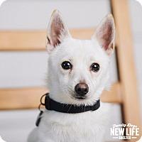Adopt A Pet :: Sven - Portland, OR