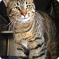 Adopt A Pet :: gitten - Muskegon, MI