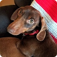 Adopt A Pet :: Donnie #2 in PA - Columbia, TN