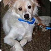 Adopt A Pet :: Skippy - Gilbert, AZ