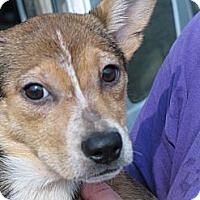 Adopt A Pet :: Frieta - Albany, NY