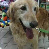 Adopt A Pet :: Chloe - Foster, RI