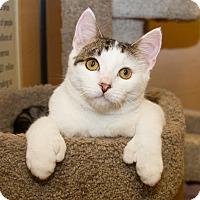 Adopt A Pet :: Tristan - Irvine, CA