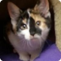 Adopt A Pet :: Angela - McHenry, IL