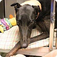 Adopt A Pet :: Lexie (Sophia) - Tucson, AZ