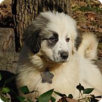 Adopt A Pet :: Hazel - Kyle, TX