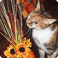 Adopt A Pet :: wanderer - Henderson, NC