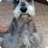 Adopt A Pet :: Niko-ADOPTION PENDING - Boulder, CO