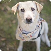 Adopt A Pet :: Layla - Kingwood, TX