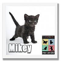 Adopt A Pet :: Mikey - Palm Desert, CA