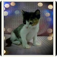 Adopt A Pet :: Kischicko - Trevose, PA