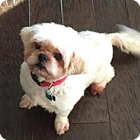 Adopt A Pet :: Buddy - Fayetteville, GA