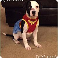 Adopt A Pet :: Matilda - DeForest, WI