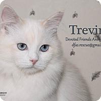 Adopt A Pet :: Trevino - Ortonville, MI