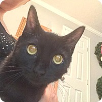 Adopt A Pet :: Snuffles - Sugar Land, TX