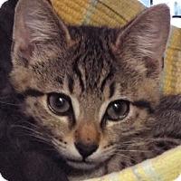 Adopt A Pet :: Cupcake - Grants Pass, OR