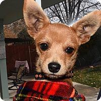Adopt A Pet :: Tank - Tijeras, NM