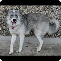 Adopt A Pet :: Nadia - Longview, TX