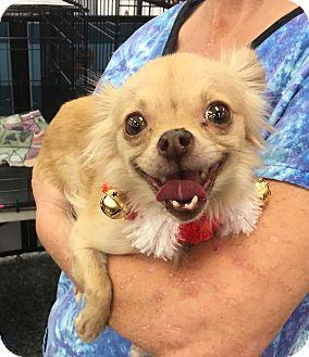 Arizona Small Dog Rescue Tucson