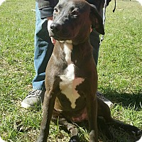Adopt A Pet :: Scotia - Chiefland, FL