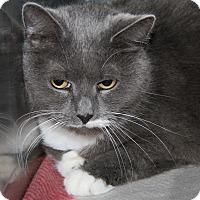 Adopt A Pet :: Macey (Spayed) - Marietta, OH