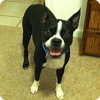 Adopt A Pet :: Kevin - Scottsdale, AZ